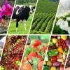 Secretaria de Agricultura realiza reunião sobre prática tributária rural em Guaçuí